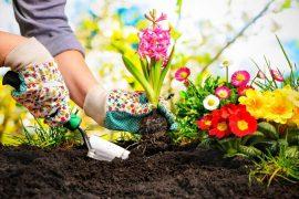 Zahradničení jako efektivní trénink